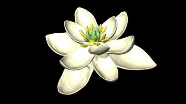 Cientistas reconstituem imagem de 'primeira flor do planeta'